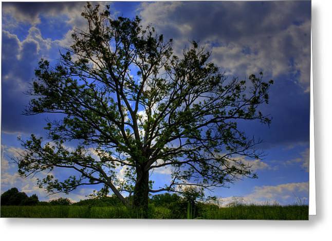 Kevin Hill Greeting Cards - Lonely Tree Greeting Card by Kevin Hill