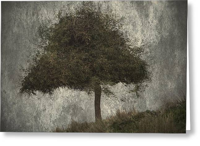 Alone Greeting Cards - Lonely Tree Greeting Card by Stylianos Kleanthous