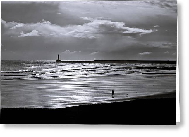 Sea Dog Framed Prints Greeting Cards - Lonely walker Greeting Card by Gary Finnigan