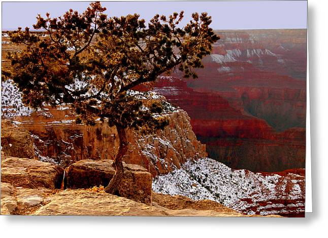 Gnarly Greeting Cards - Lonesome Tree Over Grand Canyon Greeting Card by Cindy Wright