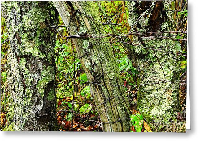 Family Time Greeting Cards - Long Ago Fence Greeting Card by Thomas R Fletcher