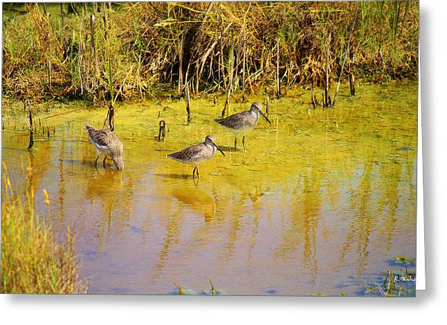 Wildlife Genre Greeting Cards - Long Billed Dowitchers Migrating Greeting Card by Roena King
