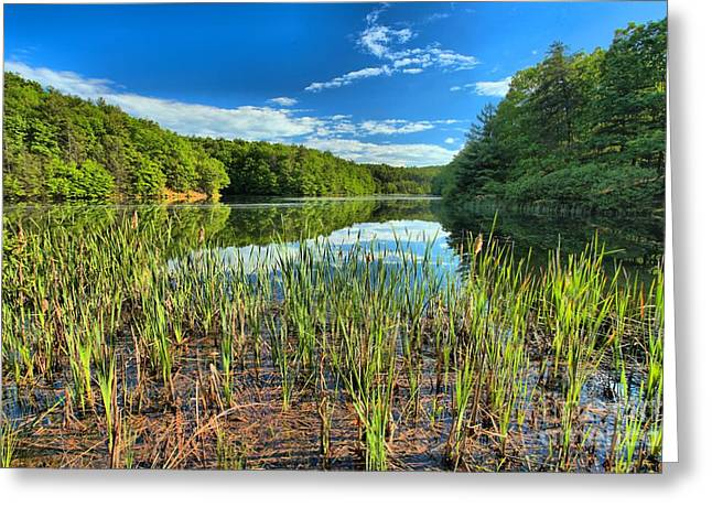 Reflection In Water Greeting Cards - Long Branch Lake Marsh Greeting Card by Adam Jewell