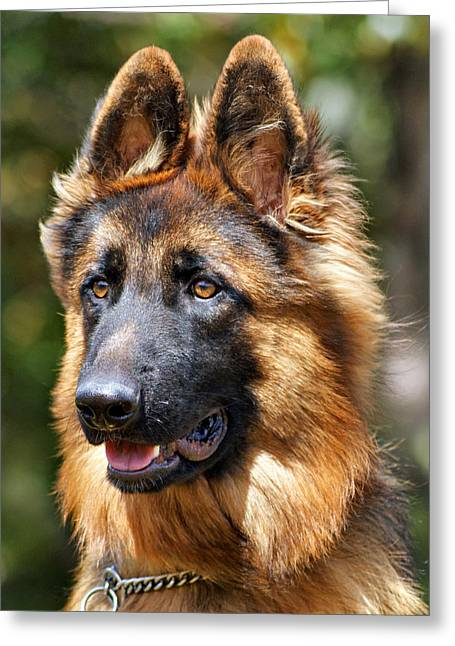 Indiana Dog Greeting Cards - Long Coated German Shepherd Dog Greeting Card by Sandy Keeton