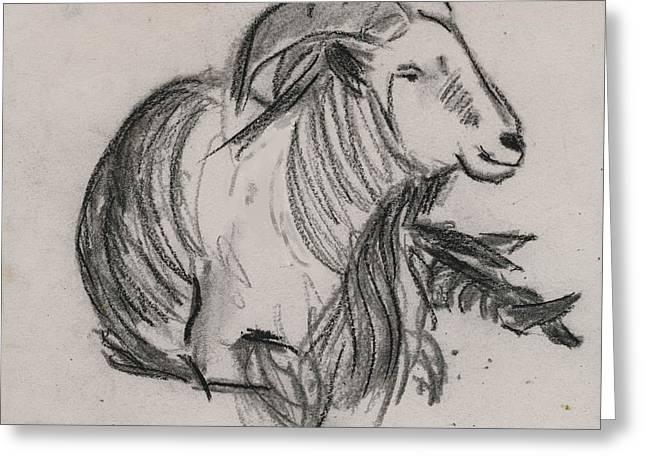 Long Horn Mountain Goat Greeting Card by Ethel Vrana