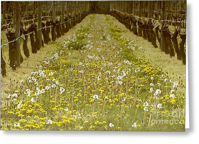 Vineyard Landscape Mixed Media Greeting Cards - Long Island Vineyard Greeting Card by Anahi DeCanio