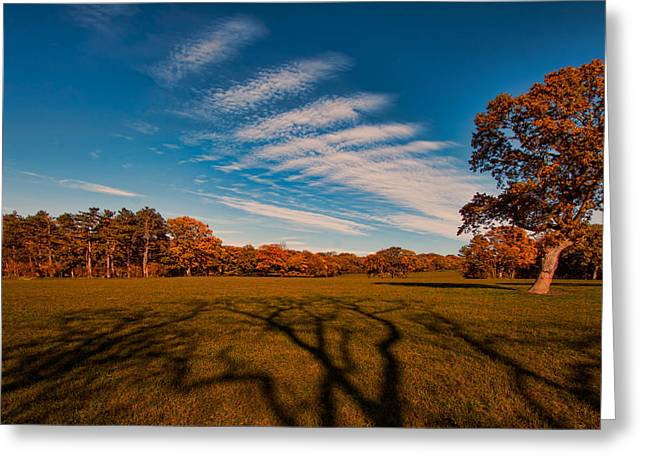 Ent Greeting Cards - Long Shadow Greeting Card by Roger Green