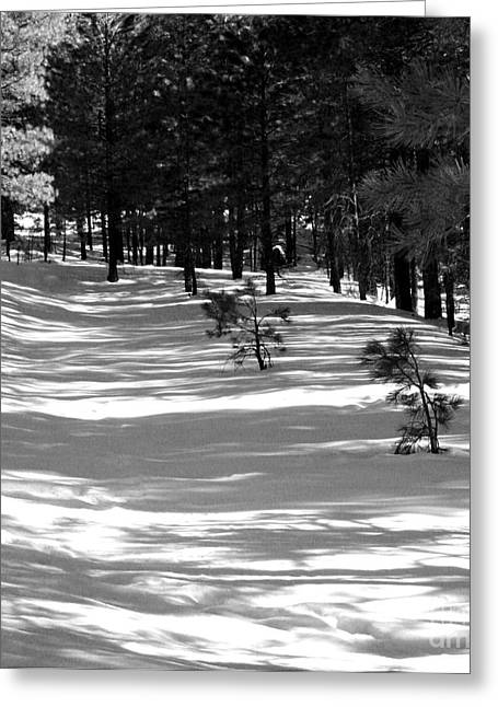 Pine Needles Greeting Cards - Long Shadows Greeting Card by Julie Lueders
