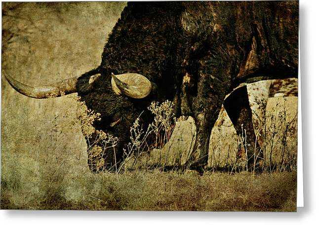 Wildlife Refuge. Greeting Cards - Longhorn Greeting Card by Lana Trussell