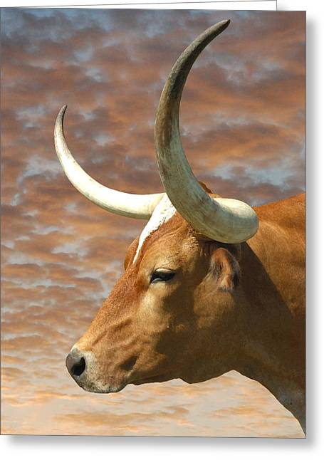 Texas Longhorn Cow Greeting Cards - Longhorn Profile Greeting Card by Robert Anschutz