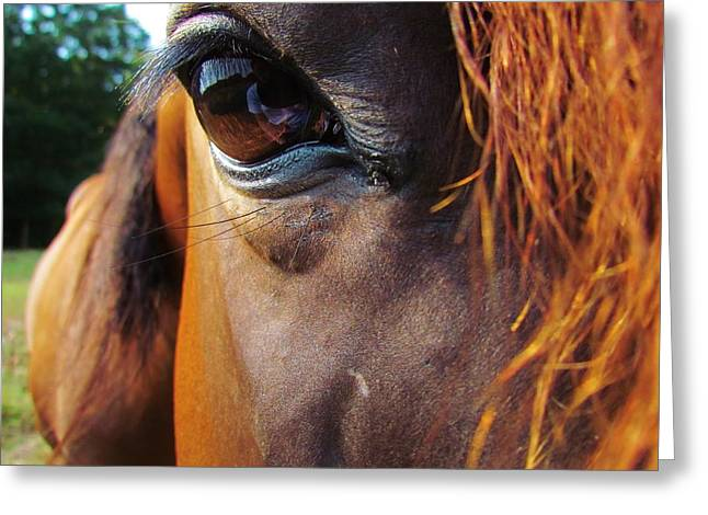 Bay Horse Greeting Card Greeting Cards - Look Into My Eye Greeting Card by Ginger Wemett