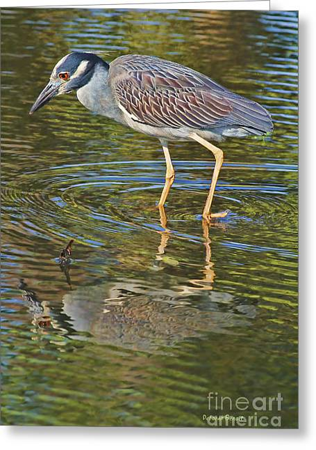 Yellow-crowned Night Heron Greeting Cards - Look Into My Eyes Greeting Card by Deborah Benoit