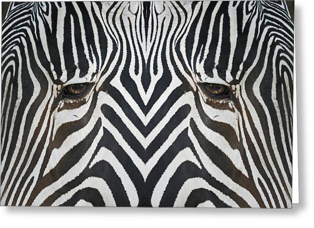 Zebra Face Greeting Cards - Look into my Eyes Greeting Card by Ernie Echols
