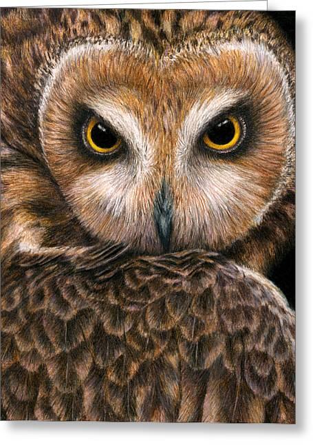 Raptor Drawings Greeting Cards - Look into my Eyes Greeting Card by Pat Erickson