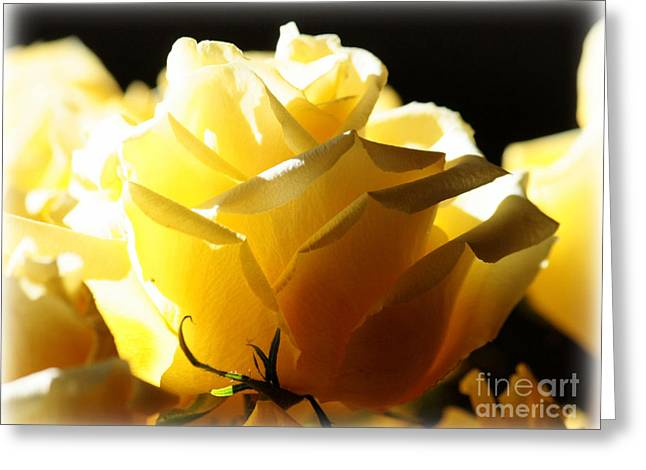 Sunlight On Flowers Greeting Cards - Look on the Bright Side  Greeting Card by Carol Groenen