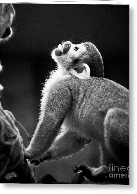 Manuel Greeting Cards - Look Up Greeting Card by Darcy Michaelchuk
