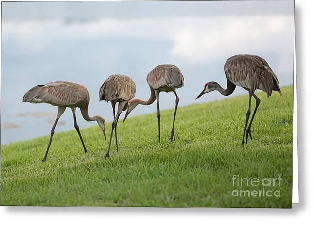 Feeding Birds Greeting Cards - Look What I Found Greeting Card by Carol Groenen