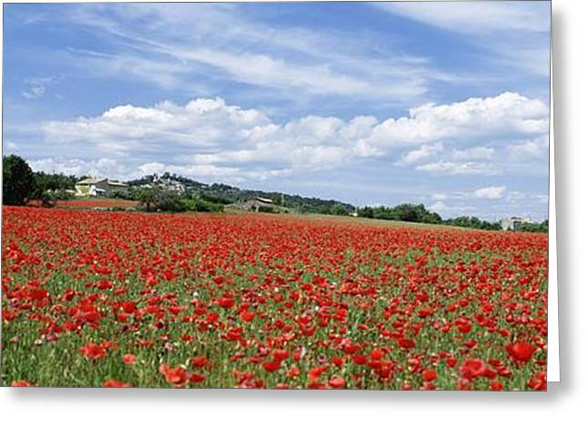 Provence Village Greeting Cards - Looking Across Field Of Poppies To Greeting Card by Axiom Photographic
