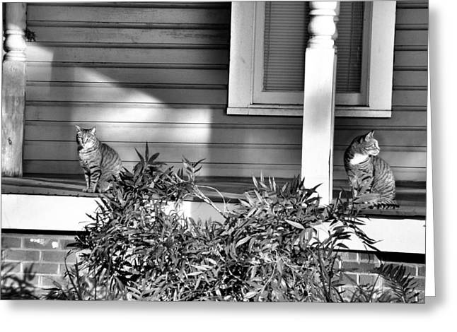 Looking Back Greeting Card by Jan Amiss Photography