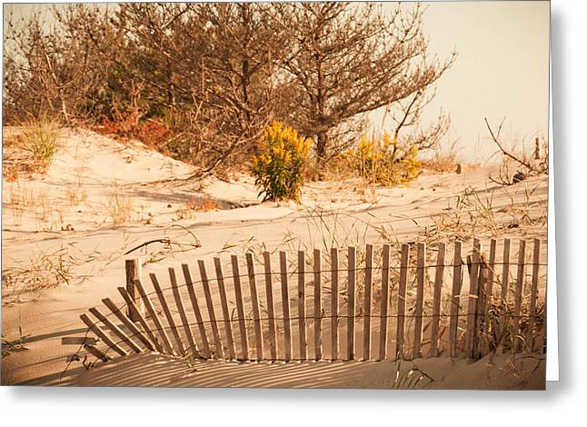 Sand Fences Greeting Cards - Looking For Coin Beach Greeting Card by Trish Tritz