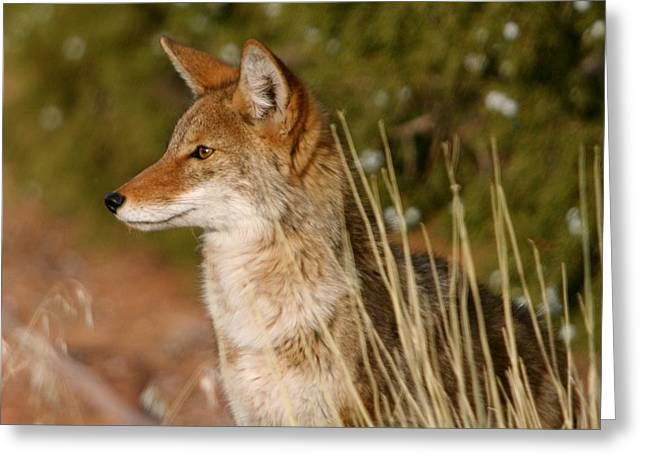 851 Greeting Cards - Looking For Lunch Greeting Card by Bob Bahlmann