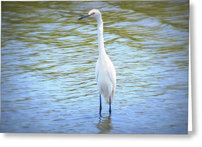 Hunting Bird Greeting Cards - Looking for Lunch  Greeting Card by Mandy Shupp