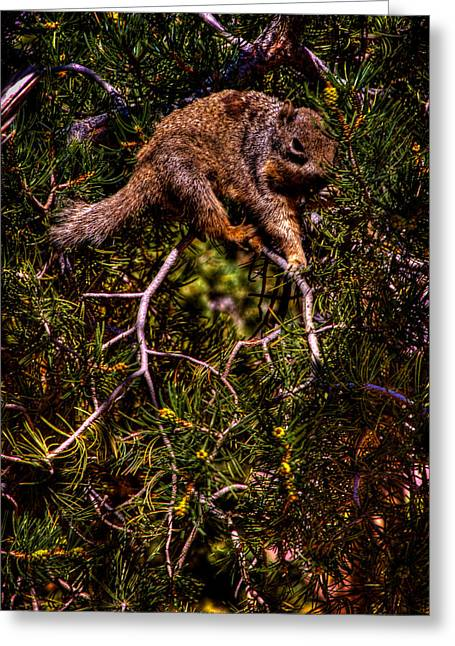 Tree Squirrel Greeting Cards - Looking for Nuts Greeting Card by David Patterson