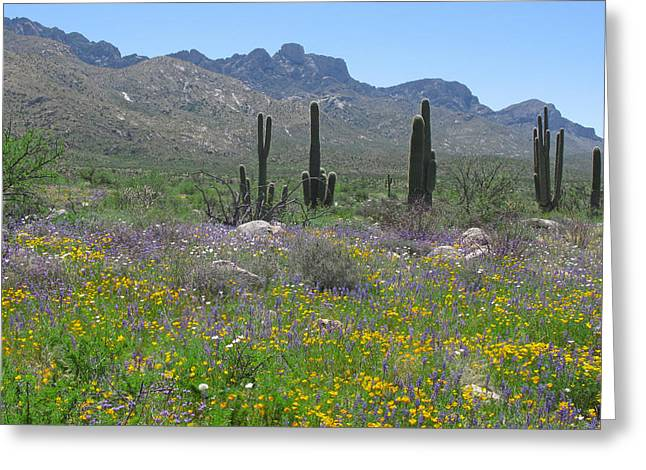 Catalina Mountains Greeting Cards - Looking South Greeting Card by Elvira Butler