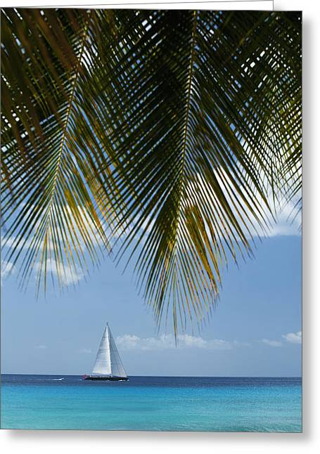 Green Day Greeting Cards - Looking Through Palm Trees To Large Greeting Card by Axiom Photographic