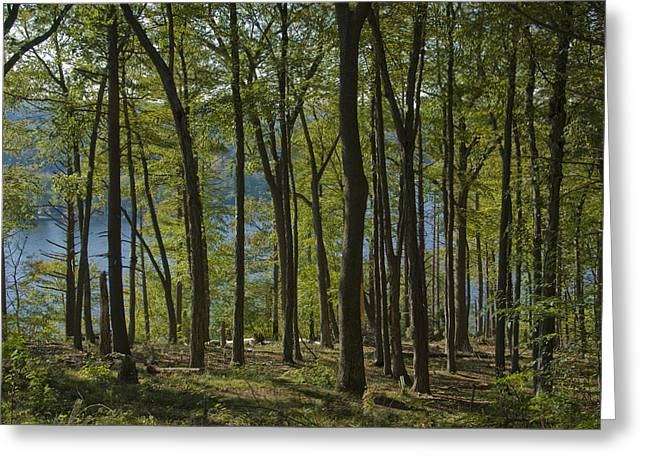 East Haddam Connecticut Greeting Cards - Looking Through The Woods Greeting Card by Todd Gipstein