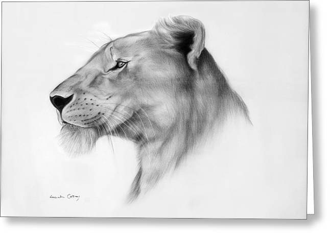 Lioness Drawings Greeting Cards - Lookout Greeting Card by Lucinda Coldrey