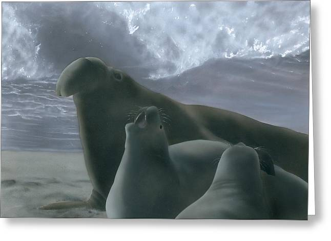 Elephant Seals Paintings Greeting Cards - Lord of San Simeon Greeting Card by Charles Parks