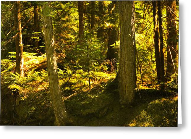 Old Growth Greeting Cards - Lord of the Rings Glacier National Park Greeting Card by Rich Franco