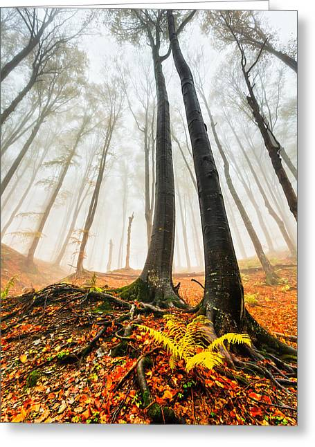 Balkan Greeting Cards - Lords of the Forest Greeting Card by Evgeni Dinev