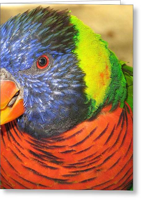 Parrot Greeting Cards - Lorie Greeting Card by Rebecca Shupp