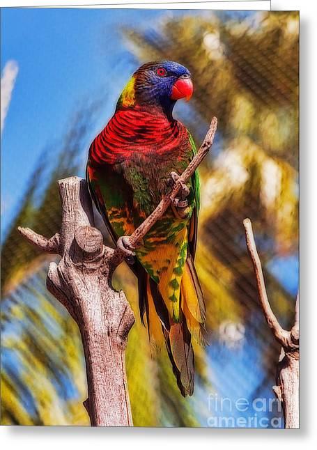 Rainbow Lorikeets Greeting Cards - Lorikeet Perched Up High Greeting Card by Eddie Yerkish