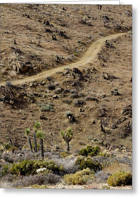 Scorch Trails Greeting Cards - Lost Horse Mine Trail 8 Greeting Card by Jessica Velasco