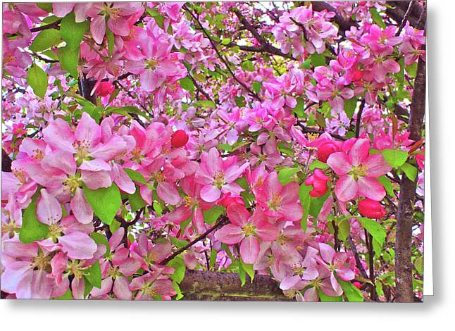 Indiana Springs Digital Art Greeting Cards - Lost In The Blossoms  Greeting Card by Mike Flake