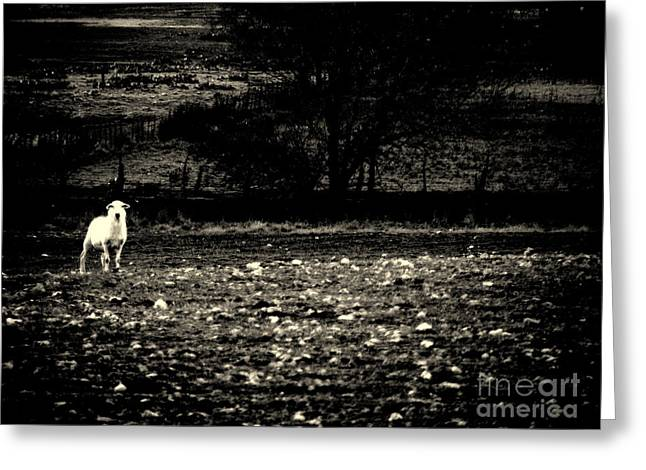 Moonlit Night Greeting Cards - Lost Lamb Greeting Card by Joe Jake Pratt