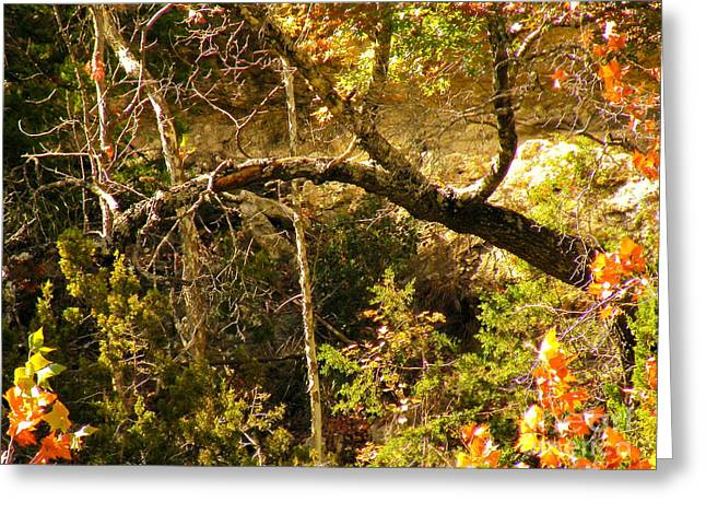 Dappled Sunlight Greeting Cards - Lost Maples State Park Greeting Card by Joe Jake Pratt