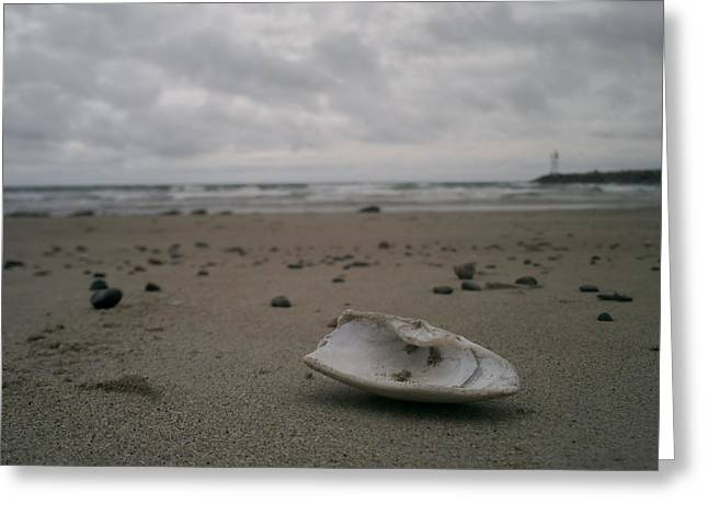 Ogunquit Beach Main Greeting Cards - Lost Shell Greeting Card by Casey Woodward