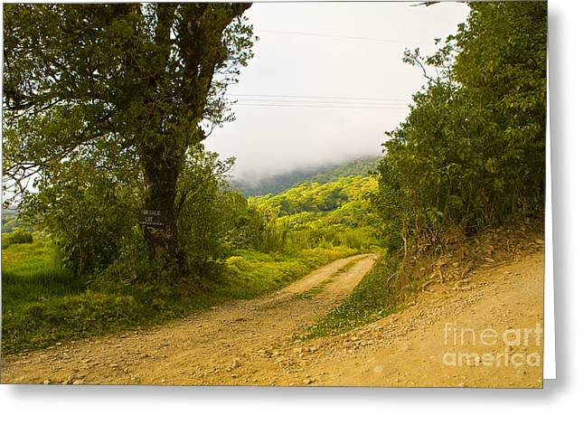Costa Greeting Cards - Lot For Sale in Costa Rica Greeting Card by Madeline Ellis