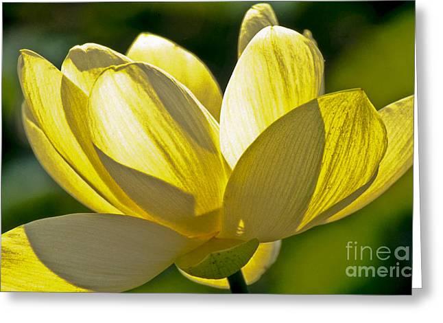 Lotus Flower Greeting Card by Heiko Koehrer-Wagner