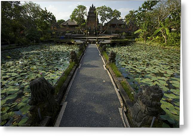 Day Lilly Greeting Cards - Lotus Pool At Pura Taman Swasti Temple Greeting Card by Tim Laman