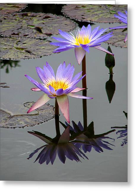 Florals Greeting Cards - Lotus Reflection 4 Greeting Card by David Dunham