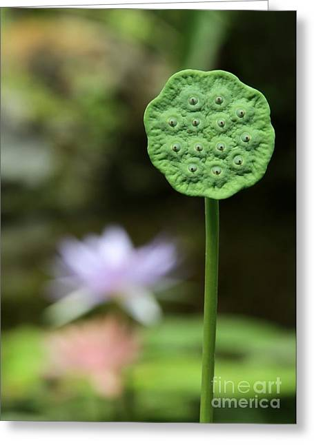 Lotus Seed Pod Greeting Cards - Lotus Seed Pod in the Lily Pond Greeting Card by Sabrina L Ryan