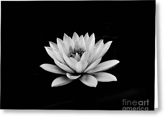 Chic Greeting Cards - Lotus  Greeting Card by Sumit Mehndiratta