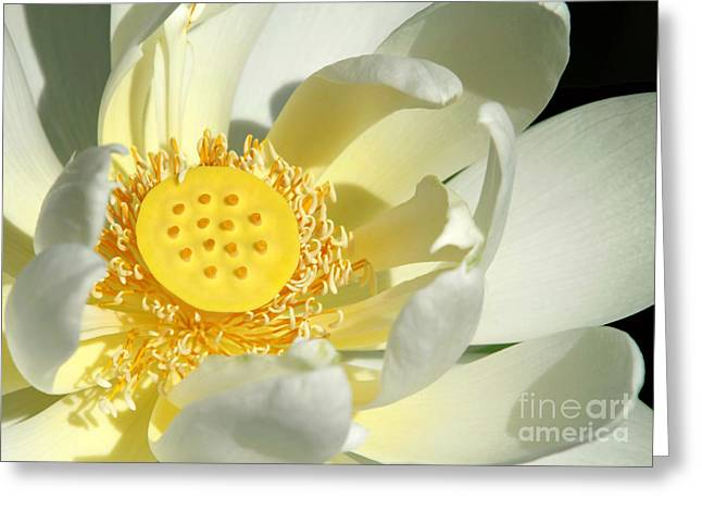 Lotus Seed Pod Greeting Cards - Lotus Up Close Greeting Card by Sabrina L Ryan