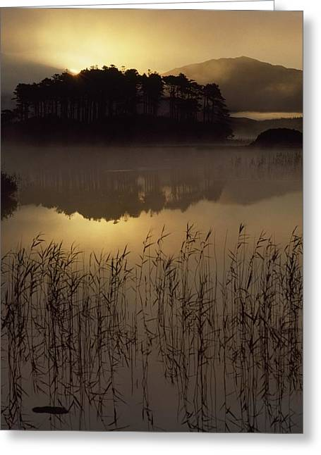 Reflection Of Trees In Lake Greeting Cards - Lough Derryclare, Co Galway, Ireland Greeting Card by The Irish Image Collection