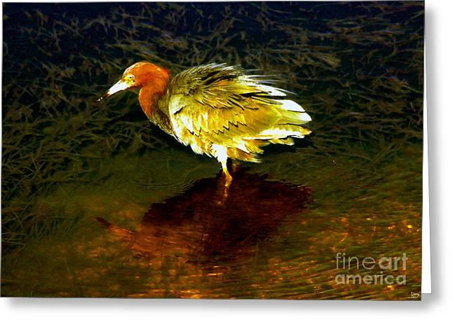 Louisiana Heron Greeting Cards - Louisiana Heron Greeting Card by David Lee Thompson